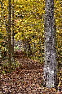 51 Autumn StrollAndrew Byrne Tompkins County