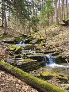 76Abundant spring streams Helen MacGregor  Onondaga County