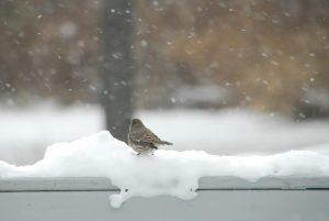 1Just watching it snow Jody Davis Oswego County