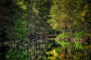 10Quiet ReflectionsBarbara Williams Onondaga County