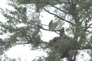74Guarding the Nest Joanne Osterhout Chenango  County