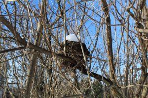 105 Frosty Birds NestMadison Siriano Oneida County