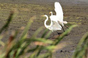 80Ready for TakeoffDavid Phelps Cayuga County