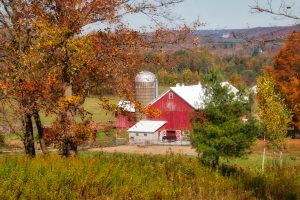 47 Fall in the country Ann Oliver Onondaga County