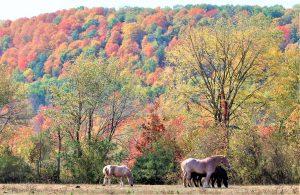 7Working horses David Phelps Ontario County