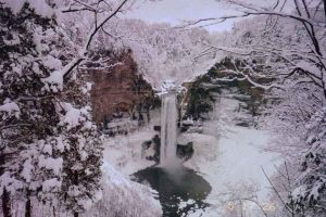 12Mr. WinterTeresa PalmerTompkins County