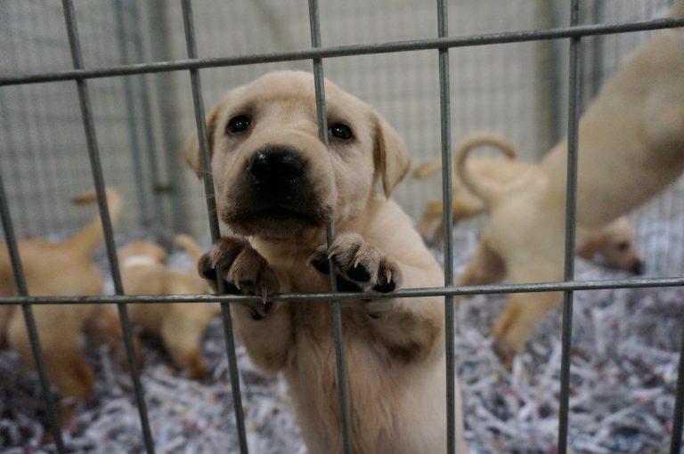 Pet 2 - ASPCA