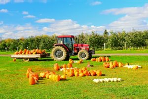 59Pumpkin Harvest Jennifer Peiffer  Onondaga County