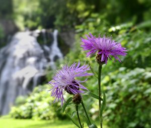 68Wildflowers and WaterfallsPatrick Varley Madison County