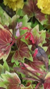 58Urban flower potPaul Williams Onondaga County