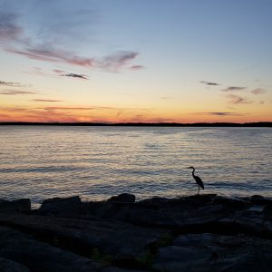 23Blue Heron Enjoying SunsetTom Seketa Jefferson County