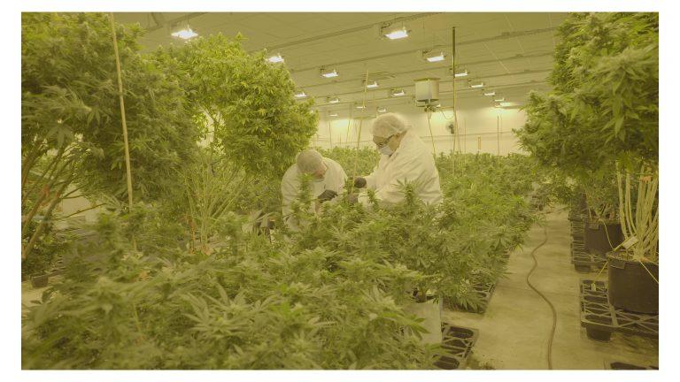 Weed, pot, drugs, reefer, doobie, farming,