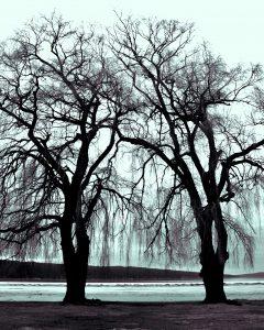 76Stewart Park, Ithaca, NYLynn Davis Cayuga County