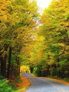1A road you should take  Susan Jones  Oneida County