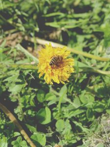 63 Bee Madison Siriano Oneida County
