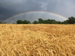 13Rainbow Over a Field of GoldMeg SchaderOnondaga County