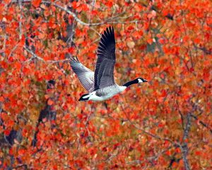 49Fall takeoff Herm Card Onondaga County